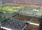 Calendário Agrícola de Plantio